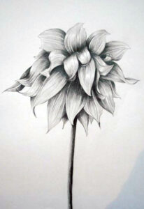 Pencil sketch by Rachael Wotherspoon